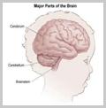 young-schoolers-brain